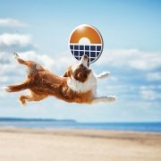 Dog Summer Save